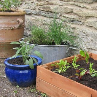 Container Garden Vegetable Patch