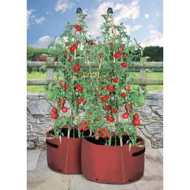Tomato Three Cane Support Planter (pack of 2)