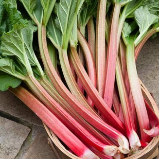 Rhubarb 'Thompson's Terrifically Tasty' (3 crowns)