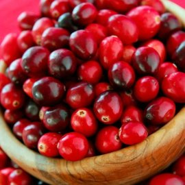 Cranberry Bush 'Earliblack' (3 plants)