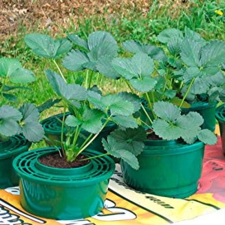 Mini Growpots (pack of 12)