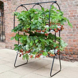 Agriframes Strawberry Tabletop with SuperCrowns