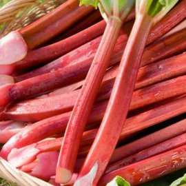 Rhubarb 'Raspberry Red' (3 crowns)