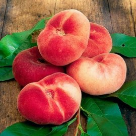 Flat Peach Tree 'Saturne'
