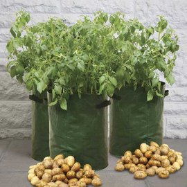 Potato Planters (pack of 3)