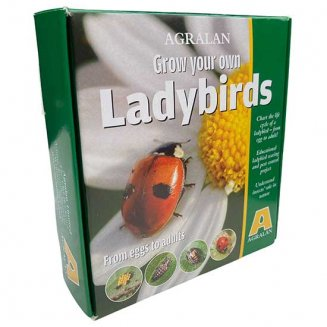 Grow Your Own Ladybird Kit