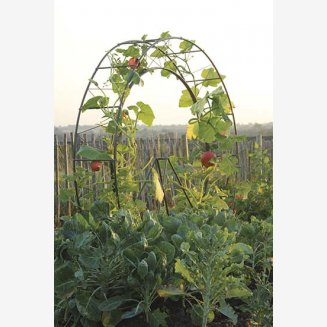 London Eye Plant Frame