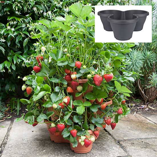 3-Tier Strawberry Planter (Anthracite) + 18 Strawberries