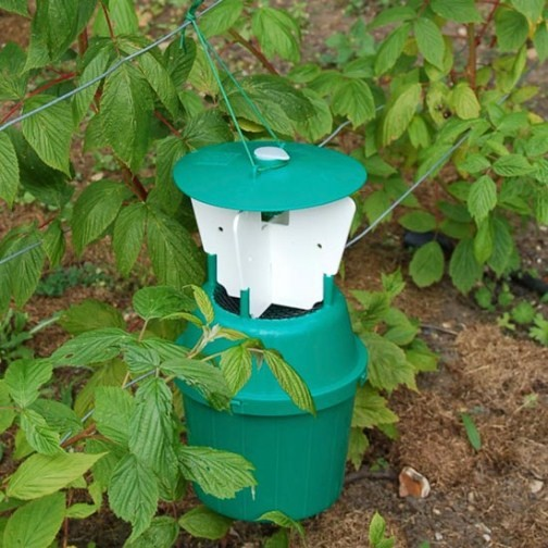 Raspberry Beetle Trap - Click Image to Close