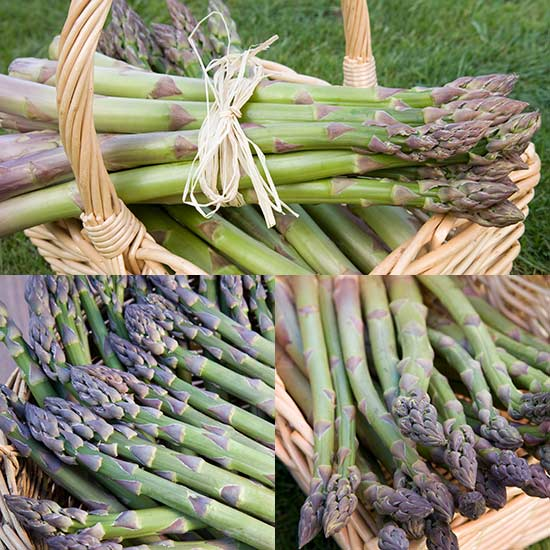 Vegetables Asparagus Collection (36 crowns)
