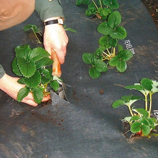 Slug Barrier for Strawberries (0.9m x 5m) - Click Image to Close