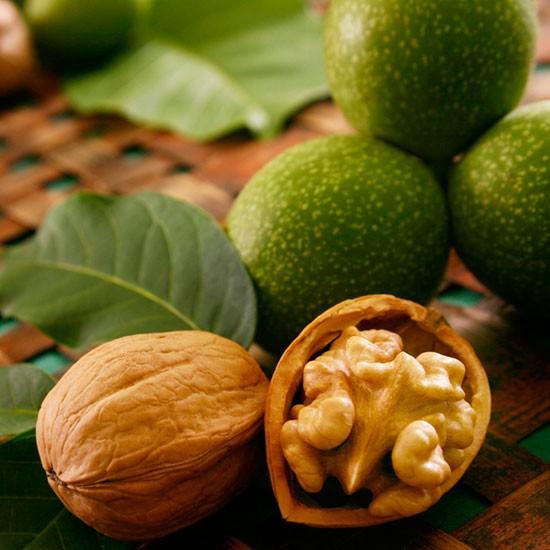Walnut Tree Broadview Nut007 Pomona Fruits Buy