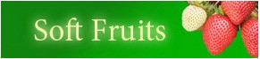 Buy Soft Fruit Bushes