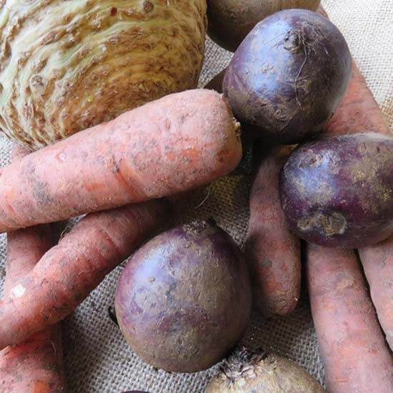 Root Vegetable Collection (60 plants) - Click Image to Close
