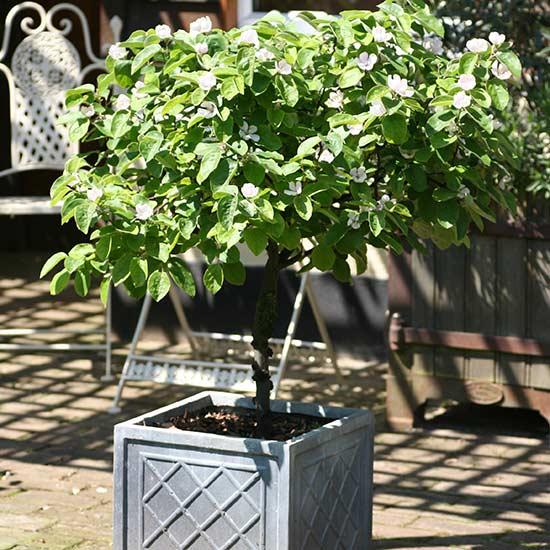 Blog Pomona Fruits Buy Fruit Trees Soft Fruit Bushes