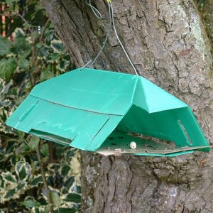 Pheromone traps set up in your fruit trees at the end of May through to August will help control maggot damage.